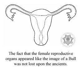 The fact that the female reproductive organs appeared like the image of a Bull was not lost upon the ancients.